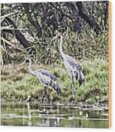 Australian Cranes At The Billabong Wood Print