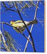 Australian Figbird Wood Print