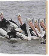 Australian Pelicans Wood Print