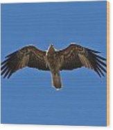Australian Sea Eagle Wood Print