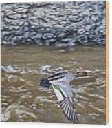 Australian Wood Duck In Flight Wood Print