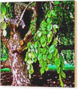 Autograph Tree Wood Print
