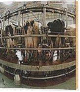Automatic Milking Machine Wood Print by Photostock-israel