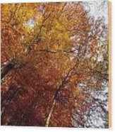 Autum Colours Wood Print