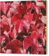 Autumn 13 Wood Print by Elena Mussi