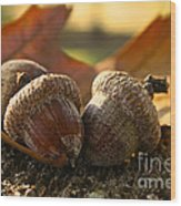 Autumn Acorns Wood Print