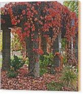 Autumn Arbor In Grants Pass Park Wood Print