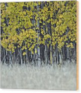 Autumn Aspen Grove Near Glacier National Park Wood Print