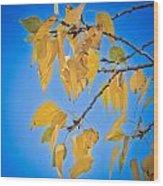 Autumn Aspen Leaves And Blue Sky Wood Print