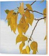 Autumn Aspen Leaves Wood Print