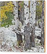 Autumn Aspens And Snow Wood Print