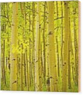 Autumn Aspens Vertical Image  Wood Print