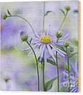 Autumn Asters Wood Print by Jacky Parker