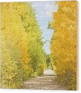 Autumn Back County Road Wood Print