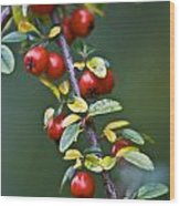 Autumn Berries Wood Print