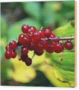 Autumn Berry Wood Print