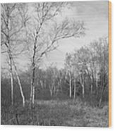 Autumn Birches Wood Print by Anna Villarreal Garbis