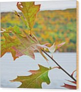Autumn Bliss Wood Print