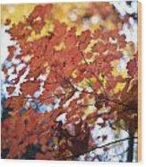 Autumn Brilliance Wood Print
