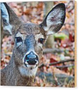 Autumn Buck Wood Print