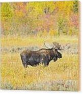 Autumn Bull Limited Edition Wood Print