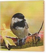 Autumn Chickadee Wood Print