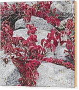 Autumn Color Is Red Wood Print