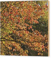 Autumn Colors In Pa Wood Print
