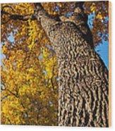 Autumn Colors Wood Print