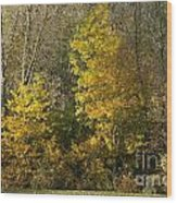 Autumn Colours Wood Print