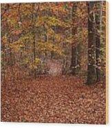 Autumn Creekside Trail Wood Print