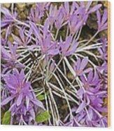 Autumn Crocus (colchicum Sp.) Wood Print