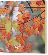 Autumn Day Dream Wood Print