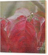 Autumn Dodwood Leaves Wood Print
