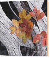 Autumn Driftwood 2 Wood Print
