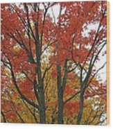 Autumn Duel Wood Print by Todd Sherlock