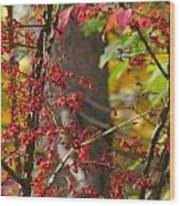 Autumn Excellence 6181 Wood Print