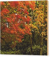 Autumn Fall Tree In Purchase New York Wood Print