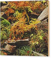 Autumn Ferns On Pickle Creek At Hawn State Park Wood Print