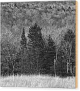 Autumn Field Bw Wood Print