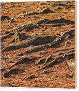 Autumn Forest Floor Wood Print