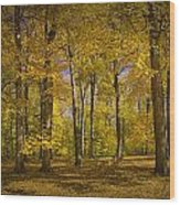 Autumn Forest Scene In West Michigan No.1140 Wood Print