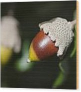autumn fruits - Mediterranean acorn macro Wood Print
