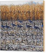 Autumn Geometry By Jrr Wood Print