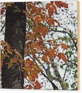 Autumn Glory At Tannehill Wood Print