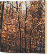 Autumn Glory Wood Print by Chris Hill