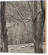 Autumn Grazing 2 Sepia Wood Print