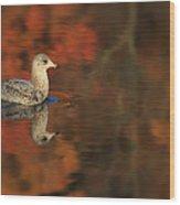 Autumn Gull Wood Print