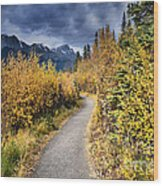Autumn In Alberta Wood Print