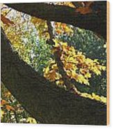 Autumn In London 7916 Wood Print